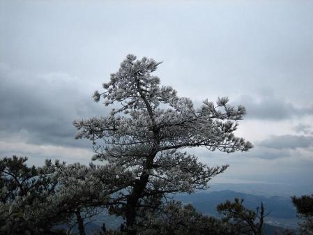 天山の樹氷 116