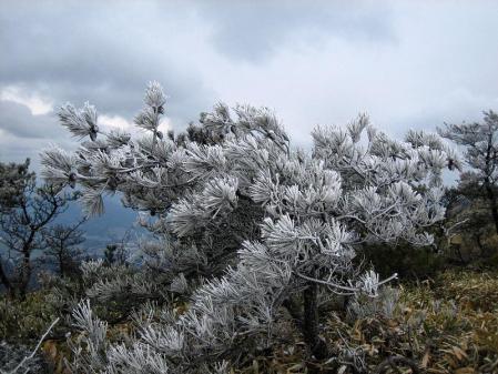 天山の樹氷 115