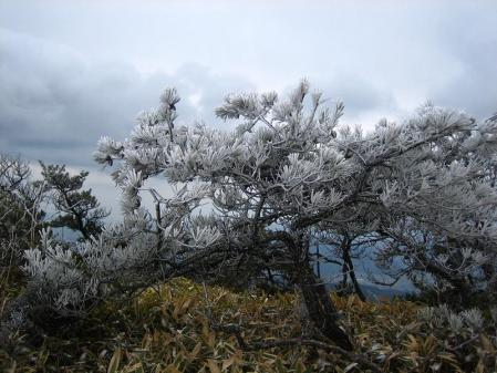 天山の樹氷 114