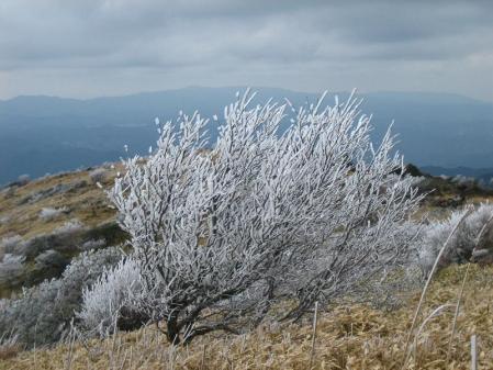天山の樹氷 118