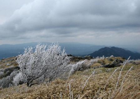 天山の樹氷 117