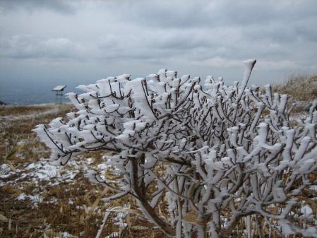 天山の樹氷 074