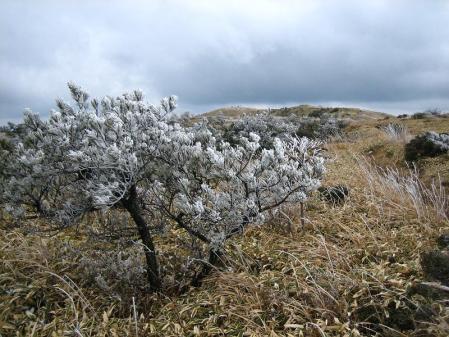 天山の樹氷 147