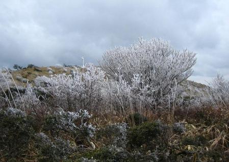 天山の樹氷 137