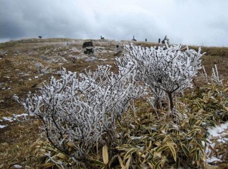 天山の樹氷 175
