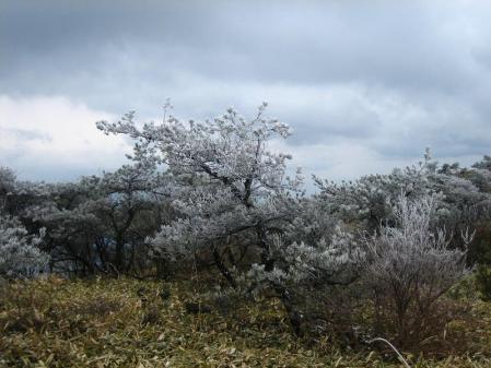 天山の樹氷 149