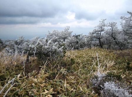 天山の樹氷 152