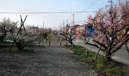 梅の木 と牛津街道 105
