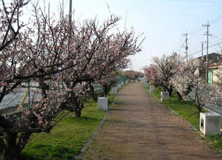 梅の木 と牛津街道 108