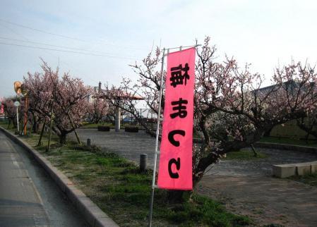 梅の木 と牛津街道 110