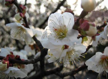 梅の木 と牛津街道 087