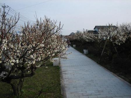 梅の木 と牛津街道 073