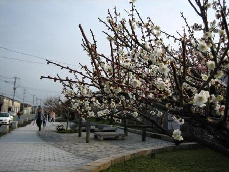 梅の木 と牛津街道 065