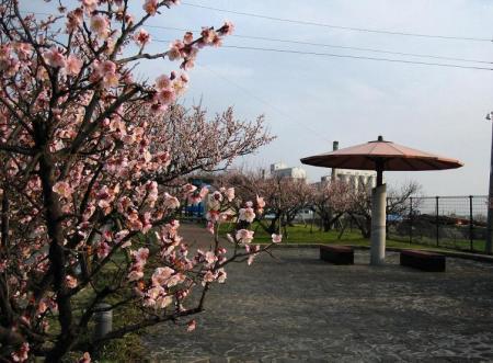 梅の木 と牛津街道 084