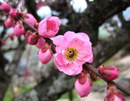 梅の木 と牛津街道 035