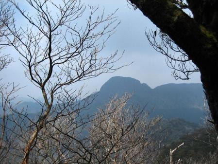 多良岳 マンサク 025