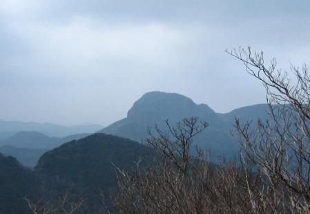 多良岳 マンサク 087