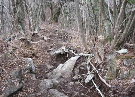 多良岳 マンサク 101