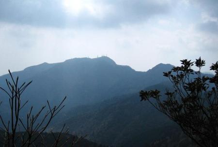 多良岳 マンサク 089