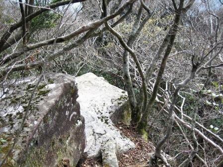 多良岳 マンサク 114