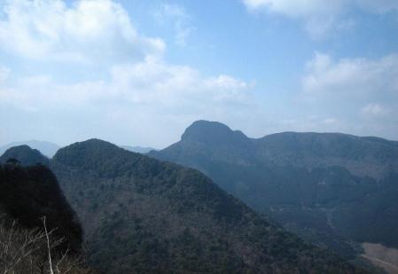多良岳 マンサク 113