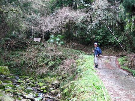 井原山ホソバナ 004