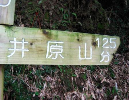 井原山ホソバナ 006