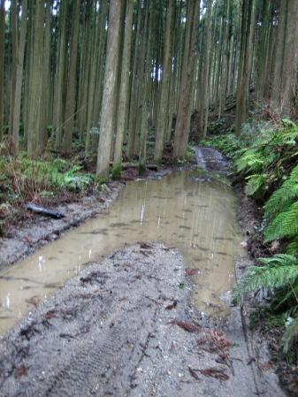井原山ホソバナ 020