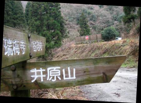 井原山ホソバナ 028