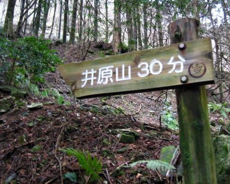 井原山ホソバナ 113