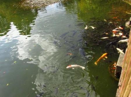 麻生池2 077
