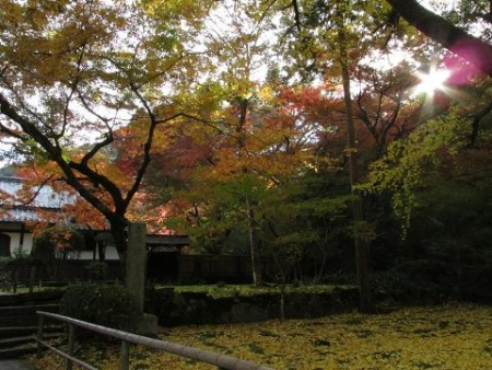 本坊庭園紅葉 038