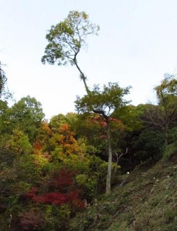 清水山 056