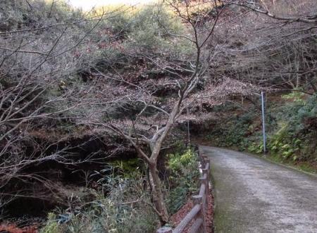 清水山 114