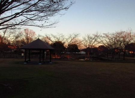ムクドリ夕陽と公園 101