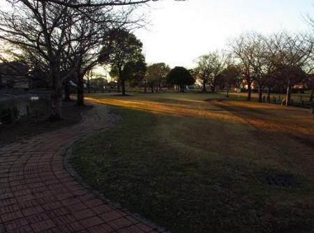 ムクドリ夕陽と公園 072