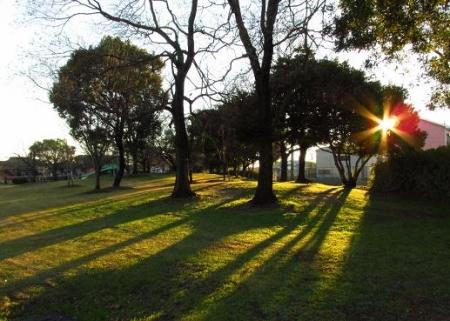 ムクドリ夕陽と公園 041