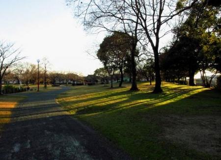 ムクドリ夕陽と公園 040