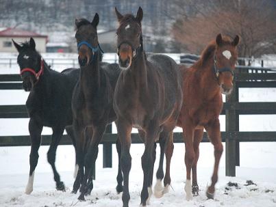 12・牡・わんぱく4牡馬