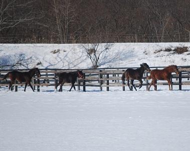 暖・牡馬4頭