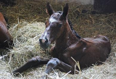 3・誕生・メジャー牡馬