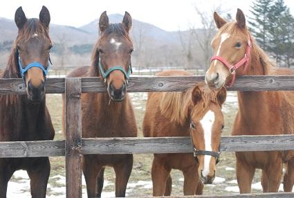 3・1歳・4頭牝