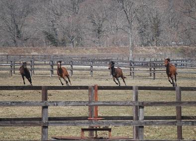 3・晴れ・1歳牝馬