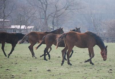 4・6日目・牝馬4頭