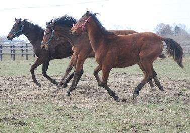 4・6日目・牝馬3頭