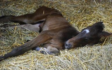 4・出産・寝る