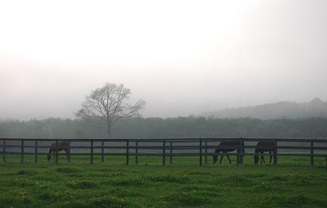 5・夕・霧に包まれる牧場