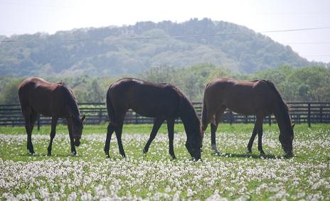 6・1歳・牝馬3頭