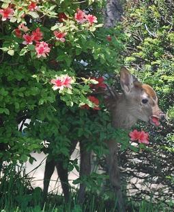 6・シカ・花を食べる