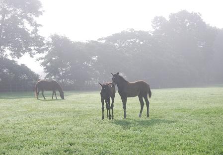 7・朝・霧の中で